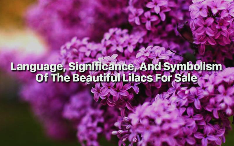 Language-Significance-Symbolism