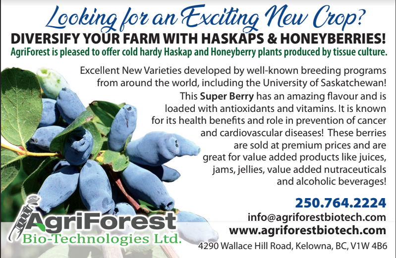 Honeyberry Haskap Plants