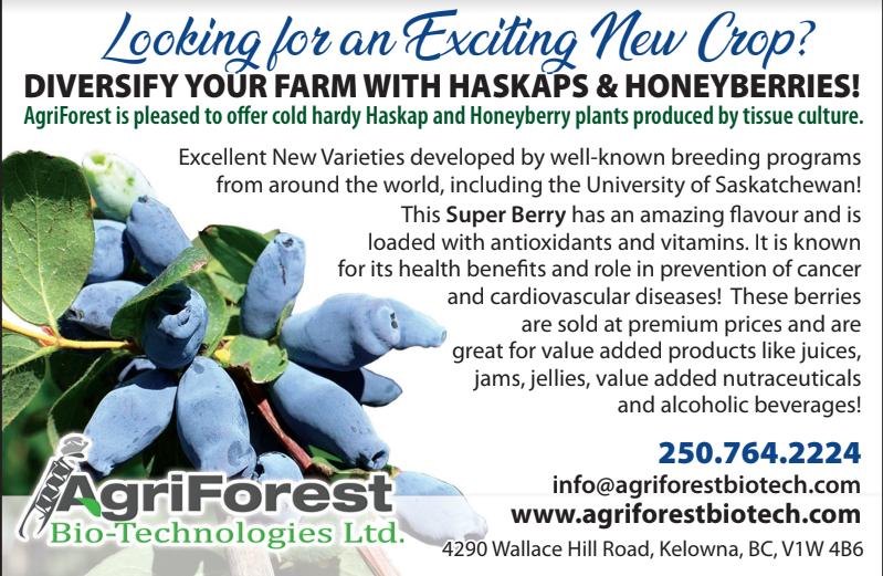Honeyberry Haskap Plants